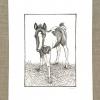 luna foal