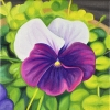 Pansy 2018 6x6 oil