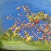 ootischenia apple tree