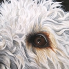 charlies-eye