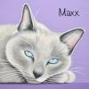 maxx 8x8