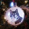 ornament in tree