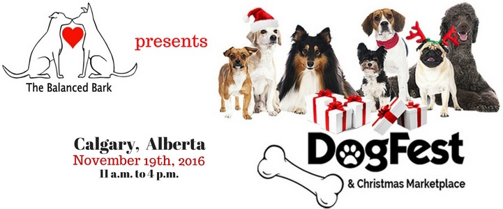 DogFest 2016 banner